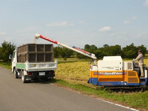 収穫後は、直ぐに乾燥させる為、トラックに積み込みます。