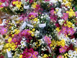 そすいの郷 花